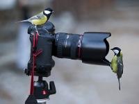 Nextcellent Camera Birds
