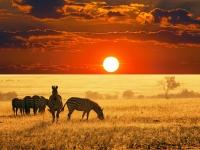 Nextcellent  Africa