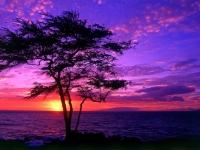 Nextcellent Sunset