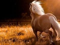 Nextcellent Horse