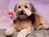 Nextcellent Puppy